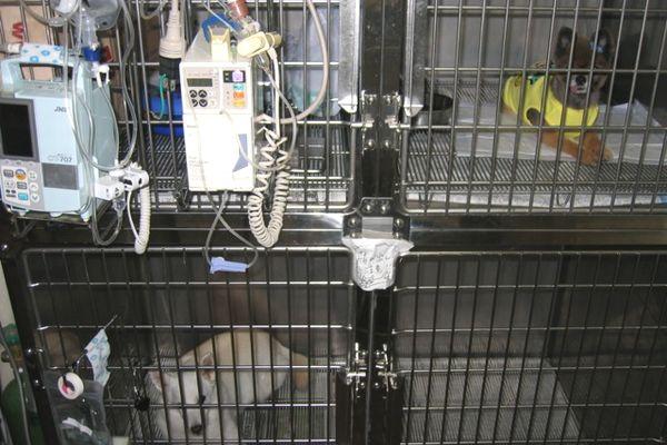 横浜 金沢区の動物病院 マーサ動物病院 医療設備 入院犬舎