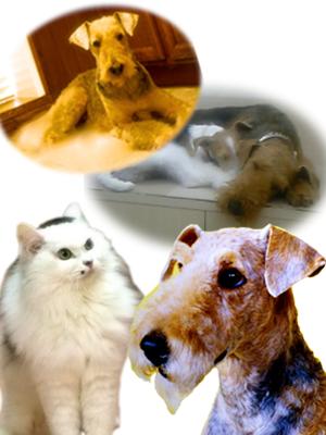 横浜金沢区の動物病院 マーサ動物病院 診療対象犬と猫